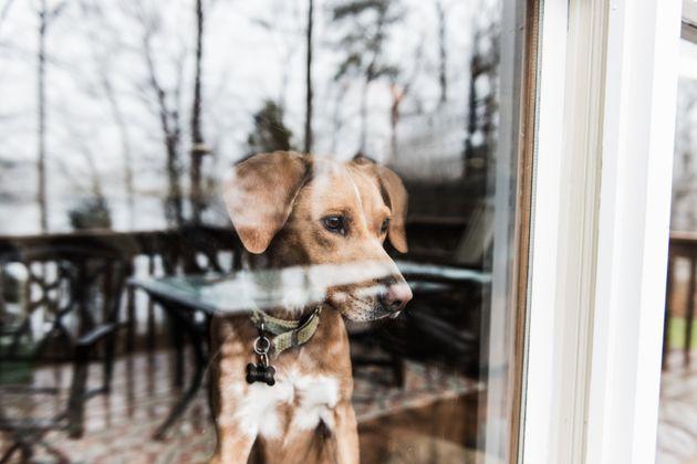 Yep, your dog needs to social distance as