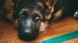 Θετικός στον κορονοϊό και δεύτερος σκύλος στο Χονγκ