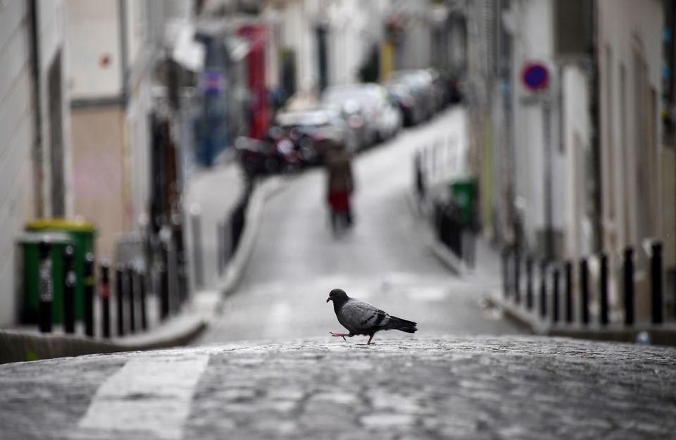 Ενα μοναχικό περιστέρι σε έρημο δρόμο της Μονμάρτης, στο Παρίσι.