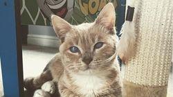 一生大きくならない猫のマンチー。白い目の子猫が、公園で拾われて家族を見つけるまで