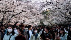 【新型コロナ】油断は禁物。日本の花見を海外メディアが報道「警告にも関わらず…」