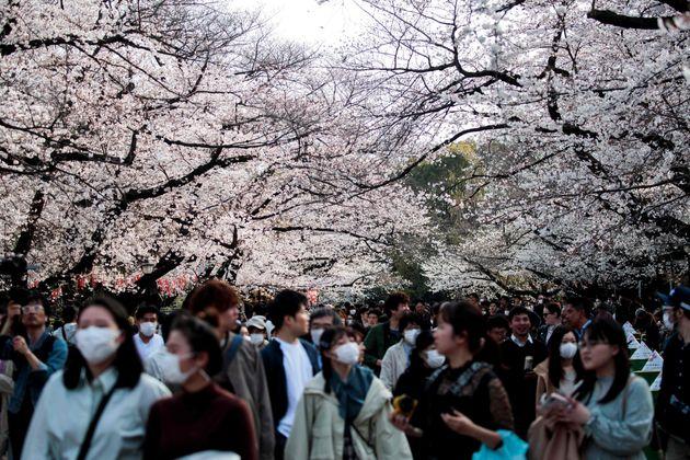 上野公園で桜の下を歩く人々