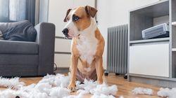 Cinco claves para estimular a tu perro durante la cuarentena por el