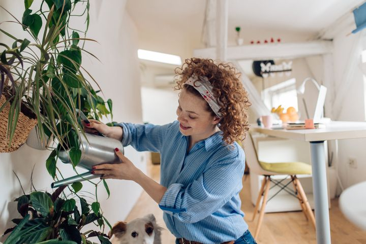 If you can't go outside, bring the outdoors in with these affordable delivery services for indoor plants.
