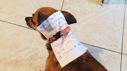 Αποστολή εξετελέσθη: Βρισκόταν σε καραντίνα κι έστειλε τον σκύλο του για