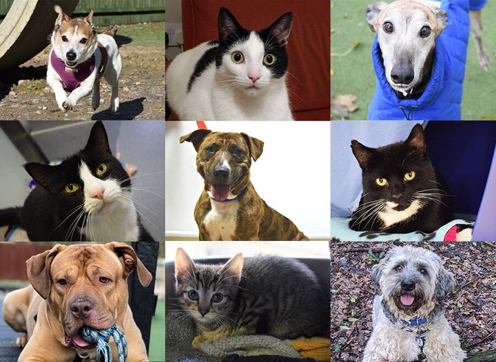 Animals rehomed from BatterseaDogs and Cats Home this month.