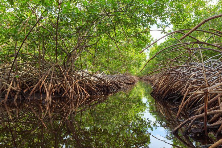 Much of the island of Utila in Honduras is swampy jungle.
