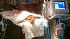 Tierkliniken, Tierärzten Und Zoos Spenden Beatmungsgeräte Zur Behandlung Von Patienten Mit Coronavirus