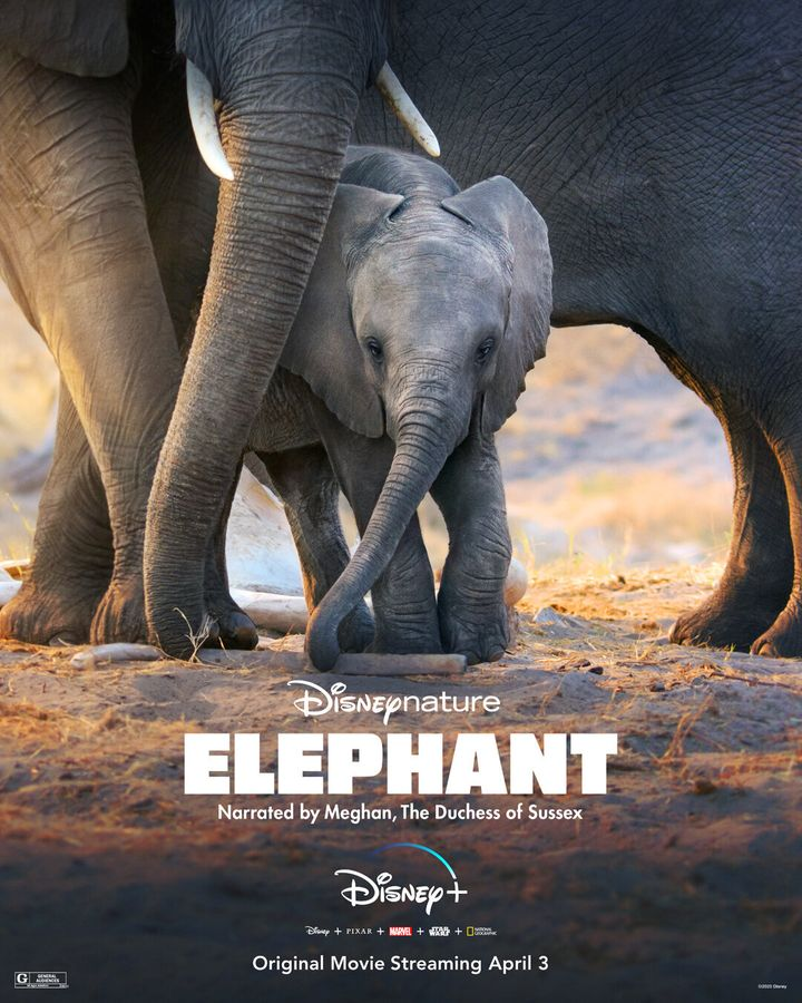 """Elephant,"" which was released April 3 on Disney Plus, follows a herd of elephants on a monthslong journey to find water."
