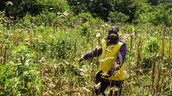 Non solo Covid-19. Dieci Paesi africani invasi dalle locuste: 25 milioni a rischio