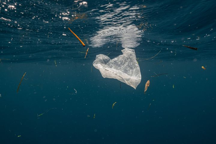 Single-use plastic is a major contributor of pollution in the ocean. It is often found in the stomachs of whales, sea turtles