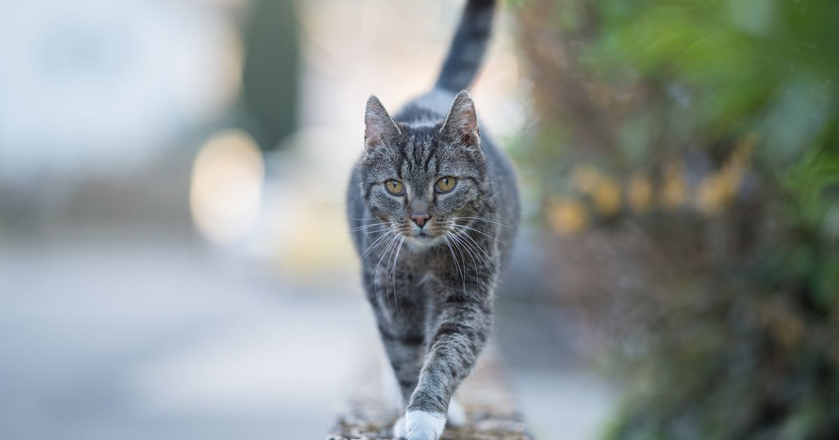 A Cat In Belgium Tested Positive For Coronavirus, But You Shouldn't Panic