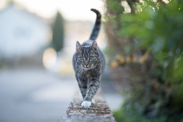 A Cat In Belgium Tested Positive For Coronavirus, But You Shouldnt Panic