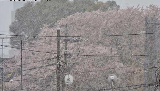 関東地方の広い範囲で雪 東京都心では気温が2℃を下回る