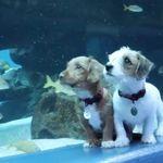 子犬たちが、新型コロナで休館中の水族館で遊ぶ姿がかわいすぎる。「友達できた!」って魚のこと?【動画】