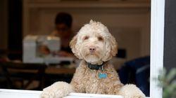 Les conseils sanitaires des vétérinaires pour les propriétaires de