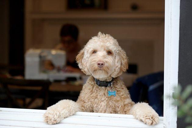 Les chiens doivent faire leurs besoins à l'extérieur, ce qui soulève des questions sanitaires avec le