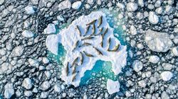 드넓은 북극에서 바다표범 20마리가 좁디좁은 얼음 위에 모여