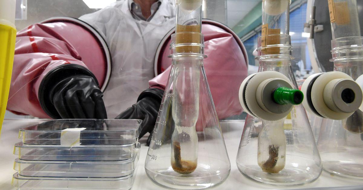 """Le vaccin BCG est """"une des hypothèses de recherche"""" pour lutter contre le coronavirus"""