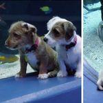 Ces chiots rescapés explorent un aquarium fermé au