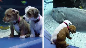 foster-puppies-closed-aquarium-coronavirus