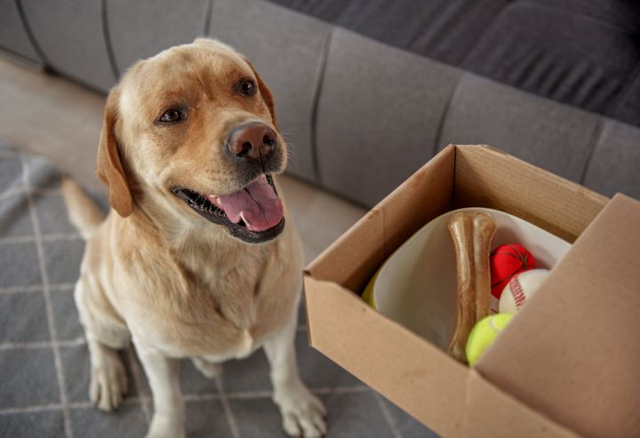 New pet owners should bookmark these pet food delivery alternatives to Amazon and Walmart.