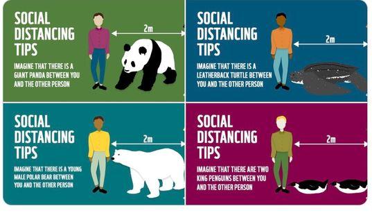 ソーシャルディスタンスは「ジャイアントパンダ一頭分」。環境保全団体の例えがあまりに独特すぎる