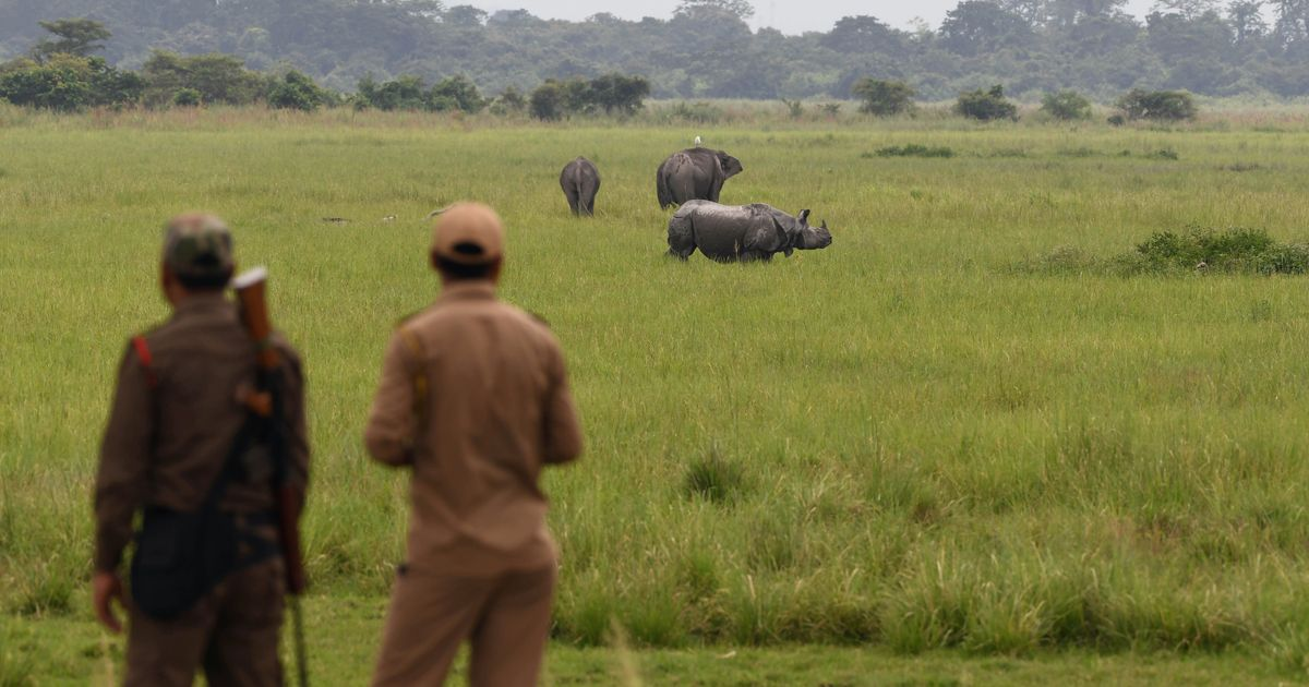 Here's How India's Forest Officials Are Guarding Wildlife During Lockdown