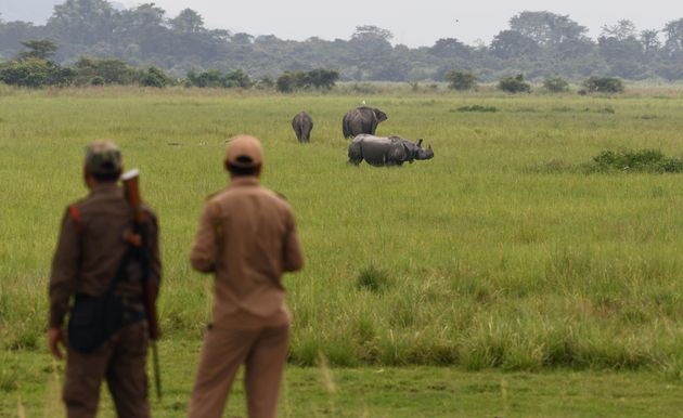 In this photo taken on June 17, 2019, Indian forest guards watch as a one-horned rhinoceros grazes along...