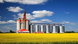 China Allows Imports Of Canadian Canola After Year-Long