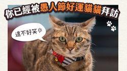 エイプリル・フールに新型コロナの嘘はやめて。「代わりに猫画像を拡散しよう」台湾のトップが珍提案