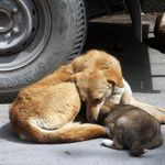 Strays Starve, Pets Abandoned: What Coronavirus Lockdown Is Doing To