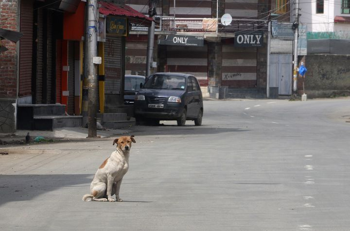 A stray dog in the middle of the main road in Srinagar, Kashmir on March 31,2020.