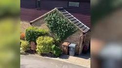 ¿Notas algo raro? Aquí hay un vecino saltándose supuestamente la