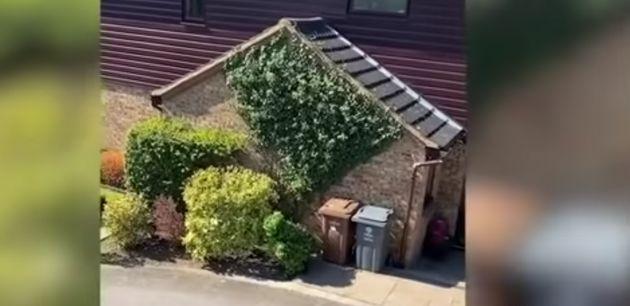 Un vecino se disfraza de arbusto para saltarse la