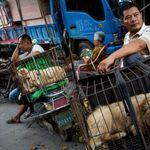 Μην τρώτε γάτες και σκύλους: Διαταγή προς τους κατοίκους της Σεντσέν στην