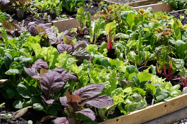 Growing our own fruits and vegetables at home can make us feel more in control,said Rose Hayden-Smith,...