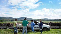 「Wagyu」ブームにチャンスあり。日本企業もオーストラリアで牧場運営