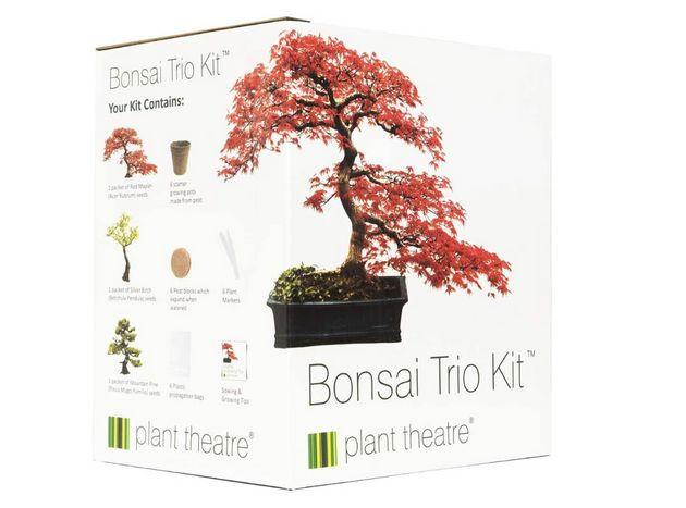 Bonsai trio