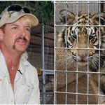 Here's What Wild Animal Experts Want You To Know About 'Tiger