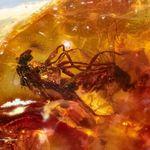 4100만 년 전 '짝짓기' 중 갇힌 한쌍의 파리가