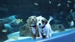 보호소 강아지들이 난생 처음 수족관에 가봤다