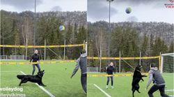 놀라운 비치발리볼 실력을 가진 개의 경기 모습