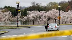 Cherry Blossoms Test People's Dedication To Physical