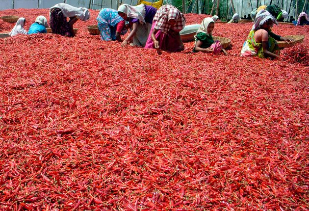 Workers spread red chilli peppers to dry at Guntur district in Andhra Pradesh March 20,