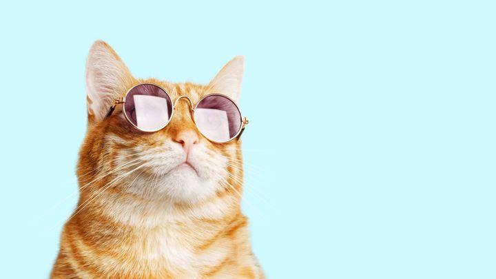 ネコ イメージ画像