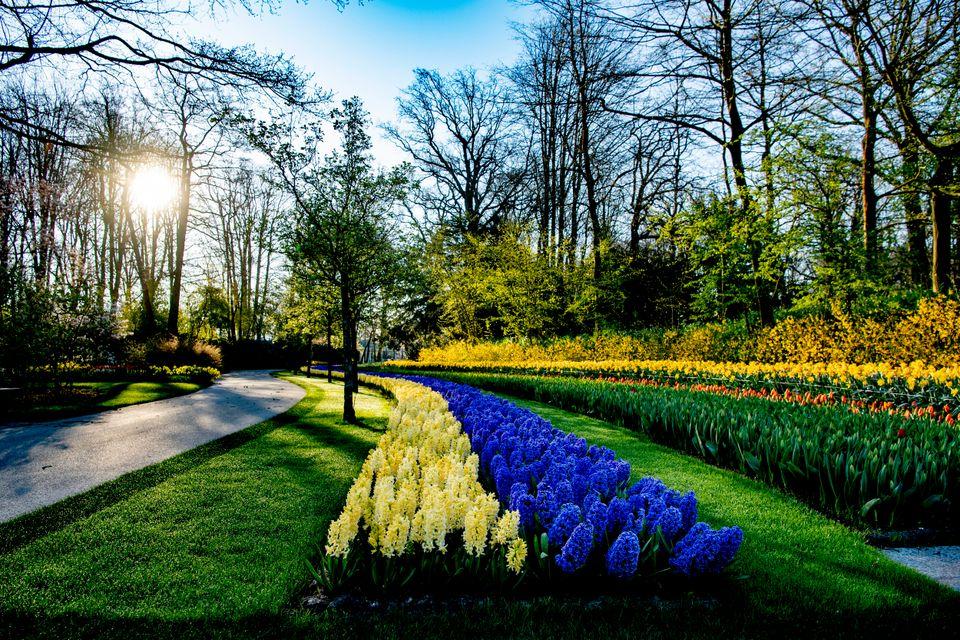 Ολλανδία 6 Απριλίου...