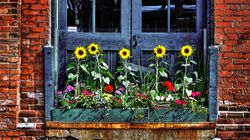 How To Make A Gorgeous Window Box – Without Going To The Garden