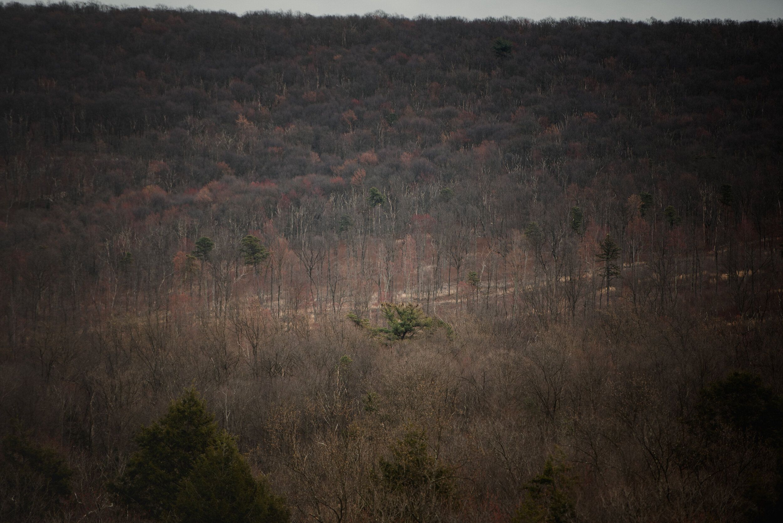 Invasive species such as ferns and stilt grass take over forest ground, which prevents new trees from growing in Auburn, Penn