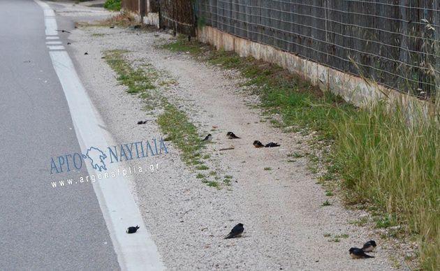 Έκκληση της Ελληνικής Ορνιθολογικής Εταιρείας για τα χελιδόνια που πεθαίνουν εν μέσω